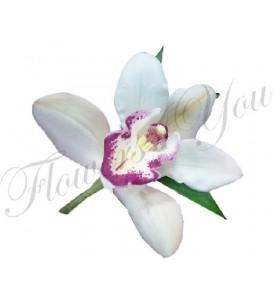 Cocarda cupa orhidee alba