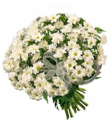 Buchete crizanteme albe funda