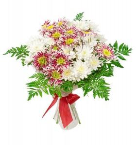 Buchete crizanteme albe grena
