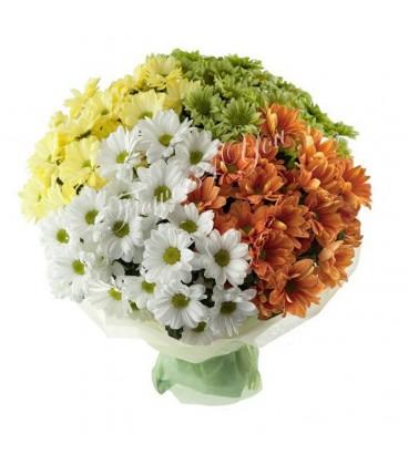 Buchete crizantema colorate