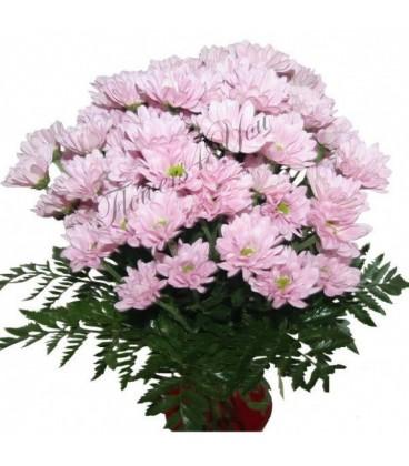 Buchete crizanteme roz