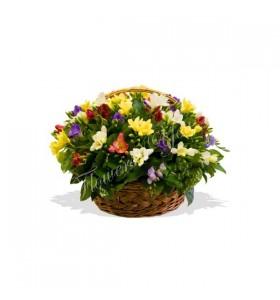 Aranjament floral frezii colorate