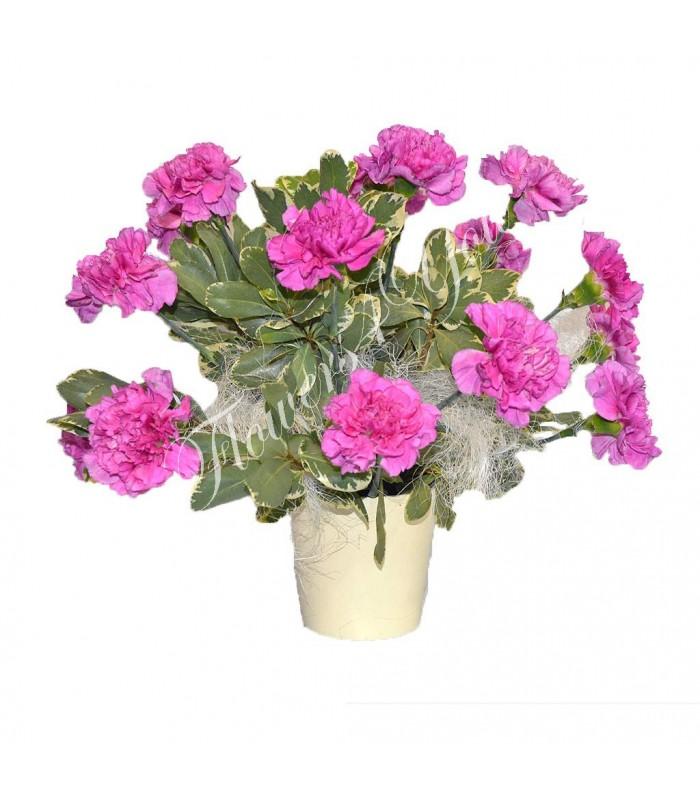 Aranjamente Florale Garoafe