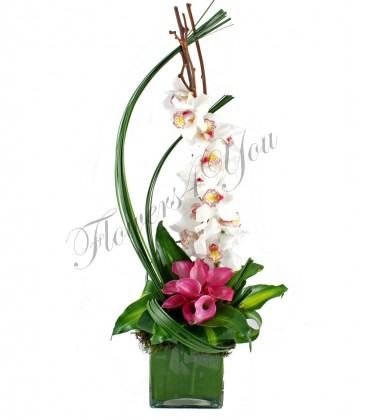 Aranjament orhidee alba cale