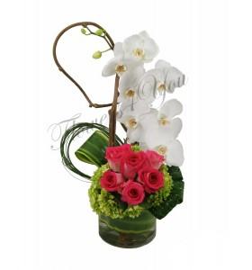 Aranjament phalaenopsis trandafiri