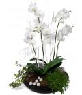 Aranjament planta phalaenopsis