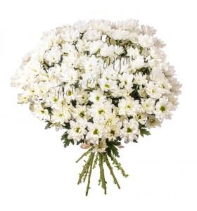 Buchete crizanteme albe