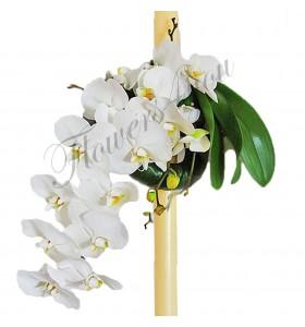 Lumanari nunta phalaenopsis